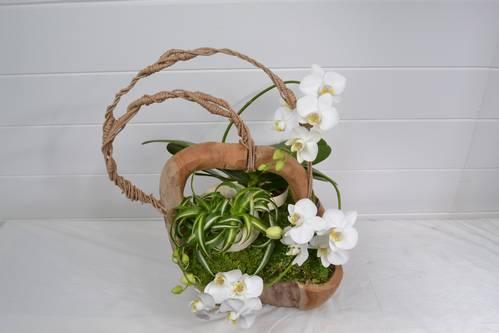 chlorophytum, orchidée